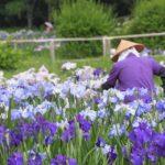 岩蔵温泉と花しょうぶまつりツアー 2019